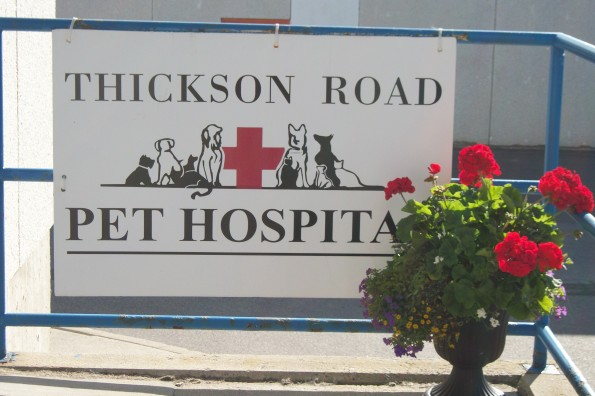 Welcome to Thickson Road Pet Hospital